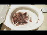 Cake Flushing with Nick Frost, Simon Pegg, and Edgar Wright