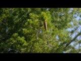 Выжить любой ценой   Ultimate Survival вместе с Bear Grylls на (DISCOVERY) Сезон 1 Серия 7  (Сьерра Невада))