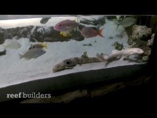 Морской аквариум, Акулы альбиносы (25 Декабря. Видео дня.)