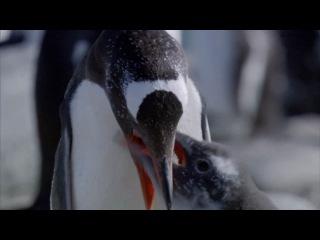 На краях Земли (1 серия / 2011) Застывшая планета / Frozen planet