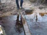 Смешно - Кот переходит ручей