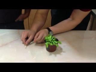 Плотоядные цветы! Хищные растения! Техника безопасности