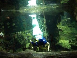 Шоу русалка Океанариум в Ривьере