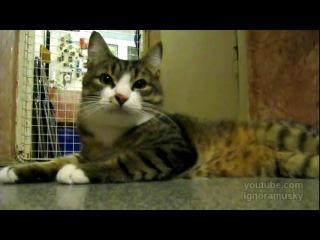 Cat and flute (Кот и флейта)