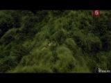 BBC: Мир природы. Очковые медведи. Тени в лесу