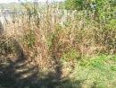 28 04 2012 Прибольничный лесо парк Кедры 5