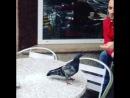 Капец они борзые, эти голуби
