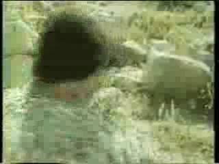 «Приключения Буратино» (1975) – инструментальная версия
