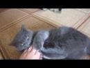мой котик , баарсик
