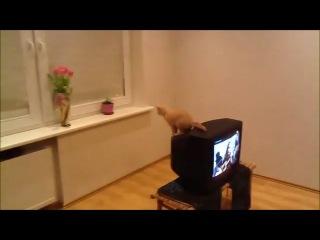 Neud prizok kota