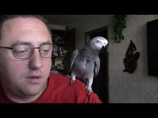 Попугай Григорий жжет...да и хозяин улыбнул :)