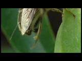 Процесс сбора нектара и пыльцы