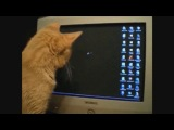 Cats Compilation - Funny Fail - WIN 2013