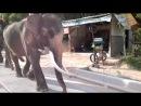 по улицам слонов водили..