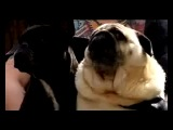 Fastbook - Собака зовёт Бэтмена
