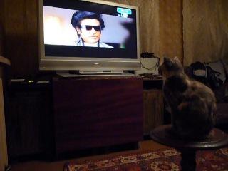 Моя кошка-ХОША.Каждый вечер с нами смотрит телевизор.