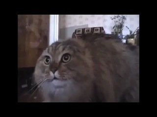 Поющий смешной кот. Единственный в мире говорящий кот