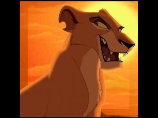 Король лев зира вк