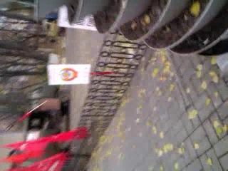 Петушиный парад в городе Батайске 07.11.2013