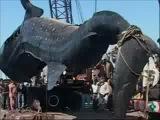 Гиганская акула. ксв