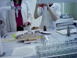 Электрофорез белков в полиакридном геле