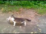 Кот с покупками идёт домой(прикол)
