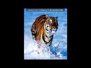 «Для тех кто любит животных)» под музыку Неизвестен - Будущий солдат +. Picrolla