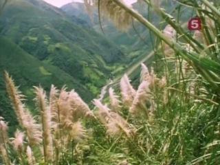 BBC. Мир природы. В мире жуков / BBC. Natural World. Beetlemania (1996) SatRip
