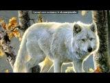волки под музыку Kumiko Noma - Эльфийская песнь. Picrolla