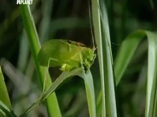 Войны жуков-гигантов / Monster bug wars 6 серия (2011)