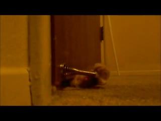 Этот кот знает, как заставить хозяина открыть дверь !!!