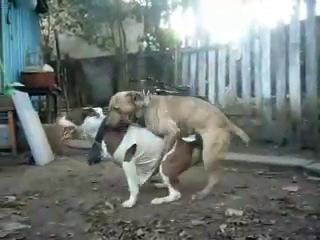 Секс пса и гея