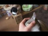 Suddenly thumb sucking kitten