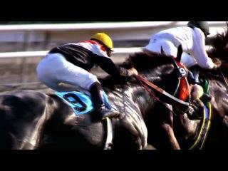 Скаковые лошади Эллис Парк