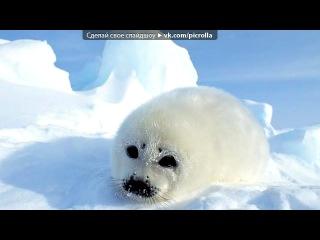 Настя Белка и животные зимой!создатель Аврутина Лиза