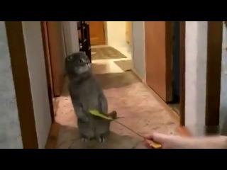 Реакция кота на дверной звонок.flv