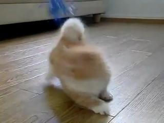 Няшный котёнок=)
