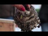 Любвеобильная сова