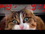«Фотомагия http://vk.com/app2406713» под музыку Камеди клаб - Пап, привет, как дела?. Picrolla