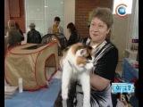 CTV.BY: Выставка необычных пород кошек прошла в Минске