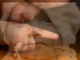 Эдуард Асадов-,,Берегите своих детей,,