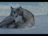 клип к фильму Белый плен.OST