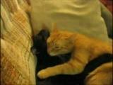 Кот и кошечка - Настоящая любовь