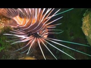 Жизнь морских обитателей / Fish Life (2010) 6 серия