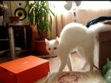 кот,человек невидимка,паника,бред,прикол,ахаха,стеб,ржака,ушел,ржач,няша :)