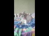 реакция моей кошки на звук скотча)))
