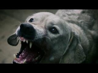 Классный эпизод из фильма-Азбука смерти- ''Собачьи бои'' (2012) WEB-DLRip
