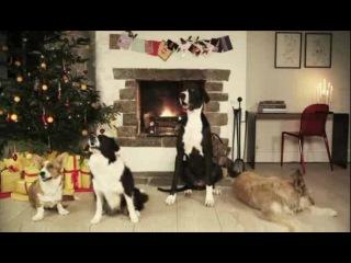 Собаки гавкают новогоднюю музыку