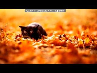 «Альбом с котятами_#1» под музыку Fleur - Теплые коты (radioedit) (Очень позитивная песенка про кошек). Picrolla
