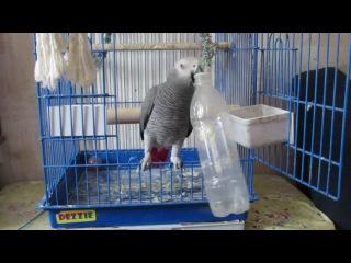 Лучшая игрушка для попугая 2
